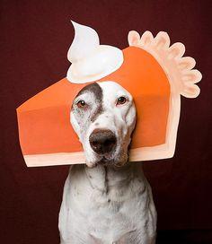 Pup in pumpkin pie