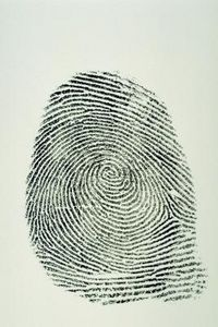 Tigers, Wolves or Bears - Taking Fingerprints - buddy up, roll finger across inkless pad, roll onto paper, observe with magnifying glass for loops, whorl or arch. Record at bottom of paper.