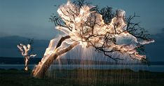 For his series of experimental photography titled Impermanent Sculptures, photographer Vitor Schietti worked with fireworks and long-exposure photography to illuminate the branches and stems of trees in his native Brazil. The photos are a mixture of in-camera light painting, and a bit of post-proc