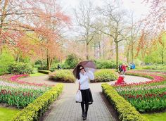 you have every reason to be thankful #keukenhof #holland by debbiefenita