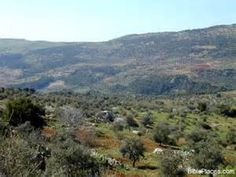 Gilead mountains west of Ajlun/ Machir was the son of Manasseh, grandson of Joseph, and father of Gilead.
