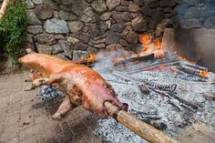 The Top 10 Survival Recipes from the Backwoods