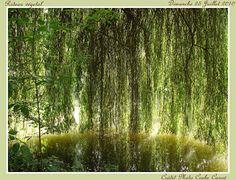 Souvent, quand la lumière est derrière le rideau végétal, l'eau n'est pas loin.