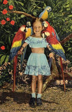 Vintage Parrot Jungle