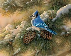 Artiste Animalier - Rosemary Millette - Bel Oiseau bleu et pommes de pin en hiver