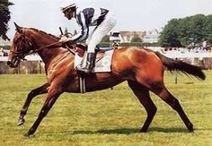 Miesque by Nureyev out of Pasodoble by Prove Out. Multiple times champion in three countries. Dam of classic winner Kingmambo and East of the Moon as well as stakes winners Miesque's Son, Moon is Up, Mingun, and the important broodmare Monevassia.