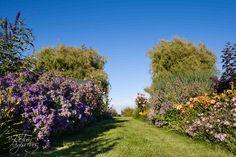 Een van de zichtlijnen in deze landschappelijke poldertuin te Ouderkerk aan den IJssel. Ontwerp: De Tuinregisseurs.