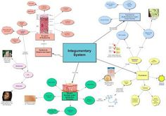 Human Tissue Concept Map.Body Systems Concept Map For Students To Fill In The Blanks