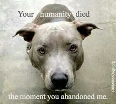 I wish I could post this at the shelter so people coming in to the shelter to leave their dog would think twice. The truth is, over 90% of pit bulls dumped in shelters die. If you dump your pit there, you are likely killing it.