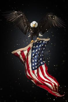 Illustration about North American Bald Eagle flying with American flag. Freedom and democratic concept. Illustration of eagle, fourth, patriot - 118764982 Patriotic Pictures, Eagle Pictures, American Flag Pictures, I Love America, God Bless America, American Flag Eagle, American Flag Tattoos, Eagle Wallpaper, American Stock