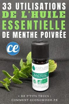 33 utilisations tonnantes de l huile essentielle de menthe poivre sant ! Health And Beauty, Health And Wellness, Health Tips, Health Benefits, Oil Benefits, Health Fitness, Vitamins For Immune System, Veterans Health Care, Sixpack Training