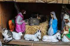 Feral cats make a nativity scene in Redhook, Brooklyn their temporary home this month. (RLJR News)