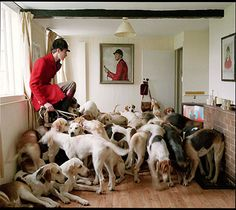 Dogs!    As seen at the National Portrait Gallery Taylor Wessing Photographic Portrait Prize in... 2008 I believe!