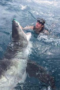 Foto de mergulhador 'acariciando' tubarão branco na Austrália intriga…