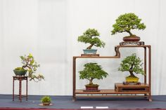 shohin-display-5