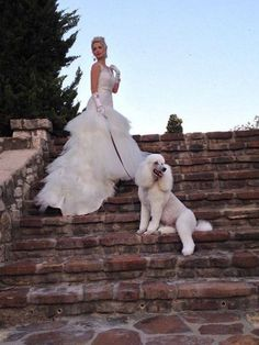 Wedding Poodle Ozzy
