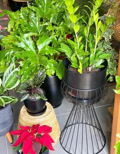 58 Best Indoor Plants To Purify The Air In Your Home These trendy Planters ideas would gain you amazing compliments. Check out our gallery for more ideas these are trendy this year. Best Indoor Plants, Hanging Plants, Gain, Compliments, Planters, Gallery, Amazing, Check, Ideas