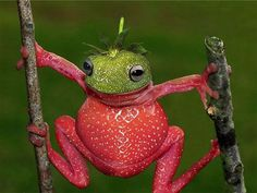 This frog dressed up like a strawberry!