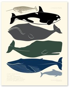 Jared loves whales right now. I need to make some fabulous silhouette art or a applique t-shirt