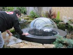 We hope you will find this short video both interesting and informative, watch the 1 meter diameter dome fill with 76 gallons of water and float half a meter above the level of the water in your pond, for more information please visit www.koidome.com     Also watch the evacuation video and see how easy the Dome is to remove for cleaning