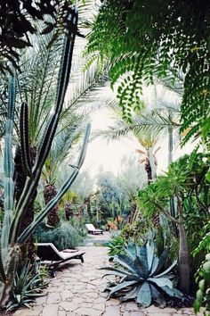Tropical landscaping - this look could certainly be achieved with Arizona-friendly plants.