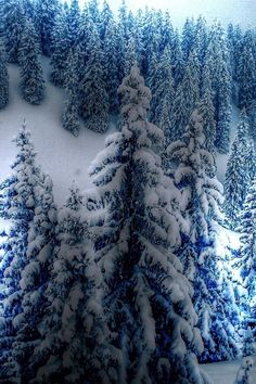 Spruce Cold Winter Fresh snow on the evergreens. Makes me feel so refreshed… I Love Snow, I Love Winter, Winter Is Coming, Winter Snow, Winter White, Blue Christmas, Winter Christmas, Merry Christmas, Christmas Themes