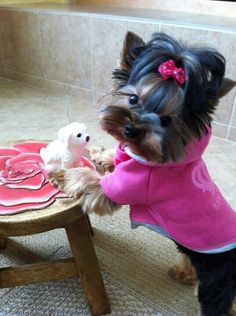 Pretty Yorkshire Terrier Puppy with her Small Doggy Toy Animals And Pets, Baby Animals, Funny Animals, Cute Animals, Cute Puppies, Cute Dogs, Dogs And Puppies, Yorkshire Terriers, I Love Dogs