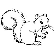 Woodland Animals Coloring Page Awesome Cute Squirrel Coloring Page Animal Coloring Pages, Printable Coloring Pages, Coloring Pages For Kids, Coloring Books, Squirrel Coloring Page, Squirrel Clipart, Animal Templates, Templates Free, Valentines Day Coloring Page