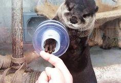 コツメカワウソと握手