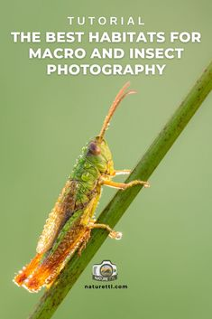 In this nature photography tutorial find out some of the best places to photograph insects and other macro subjects. Wildlife Photography Tips, Best Camera For Photography, Insect Photography, Close Up Photography, Photography Basics, Photography Tips For Beginners, Underwater Photography, Photography Tutorials, Take Better Photos