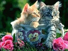 sweet kittens - Cats Wallpaper ID 587374 - Desktop Nexus Animals Baby Sleep Aids, Kitten Quotes, Baby Animals, Cute Animals, Infinity Art, Kitten Wallpaper, Newborn Kittens, Cat Whiskers, Paws And Claws
