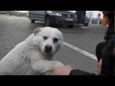 The Friendliest And Sweetest Stray Dog You Will Ever See