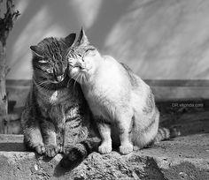 Namorados....