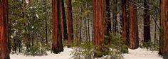 Yosemite Sequoia Forest, USA - Photography by Slava Mylnikov