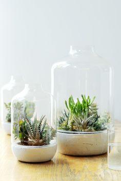 cactus en succulenten in glas stolp