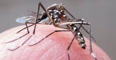 País tem 60 dias para destruir focos de mosquito e evitar explosão de zika