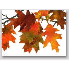 AUTUMN LEAVES All Occasion Greeting Card Collage Art design by Linda... ($4.50) ❤ liked on Polyvore featuring home and home decor