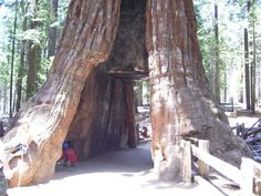 Giant Sequoia National Park