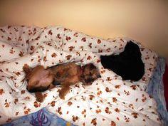 Cat&dog=love