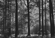 Wall Mural AVALON FOREST photo Wallpaper Large size wall art BLACK AND WHITE #WizardGenius #Wallpaper