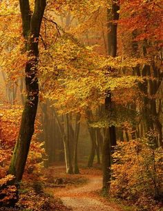 52 Ideas Photography Autumn Leaves Paths For 2019 Beautiful World, Beautiful Places, Beautiful Pictures, Amazing Places, Beautiful Forest, Beautiful Mind, Autumn Scenes, All Nature, Autumn Nature