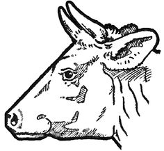 How to Draw Cow's Face and Head with Step by Step Drawing Tutorial