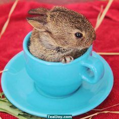 How do you take your bunny: with milk or sugar? Coffee, Baby Boy Blues....