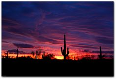 I love the desert in Arizona...the cacti and the skies are incredible.