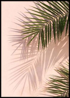 Pink Palm Poster in de groep Posters bij Desenio AB (2405)