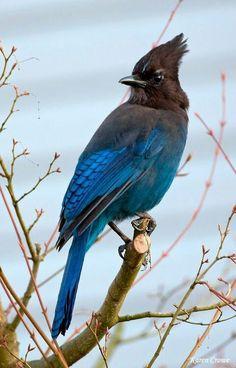 ((((((⃢⃢🐤 #Birds ((((((⃢⃢🕊 #kuş ((((((⃢⃢🐦