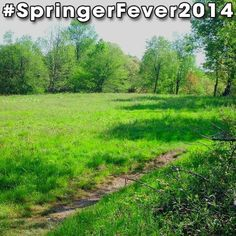 #SpringerFever2014 #AppalachianTrail #Trail #AT #BackpackingAT #Backpacking #Hiking #Hike #Latergram #Green