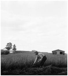 slides/2-08135.jpg Niittäjä, Länsipohja, Täräntö, Kainulasjärvi, 1932 Niittäjä, Länsipohja, Täräntö, Kainulasjärvi, 1932