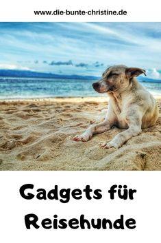 Visit Florida, Florida Vacation, Florida Beaches, Chengdu, Dog Travel, Family Travel, The Perfect Dog, Dog Beach, Dog Friends