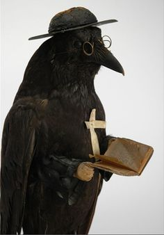 Victorian raven taxidermy